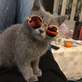 Dog Cat Glasses Eye-wear Protection Sunglasses