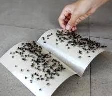 keo dính ruồi (10 cái)