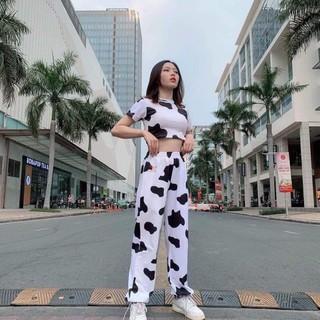 Bộ bò sữa hot hít 2021, bộ crotop bò sữa