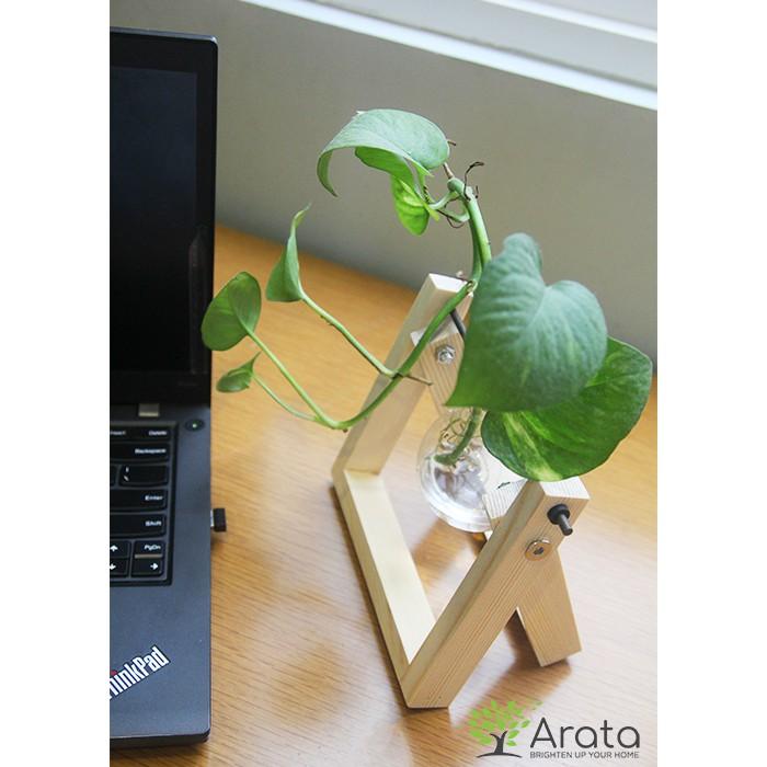 Lọ thuỷ tinh và khung gỗ chéo trang trí cây để bàn Arata