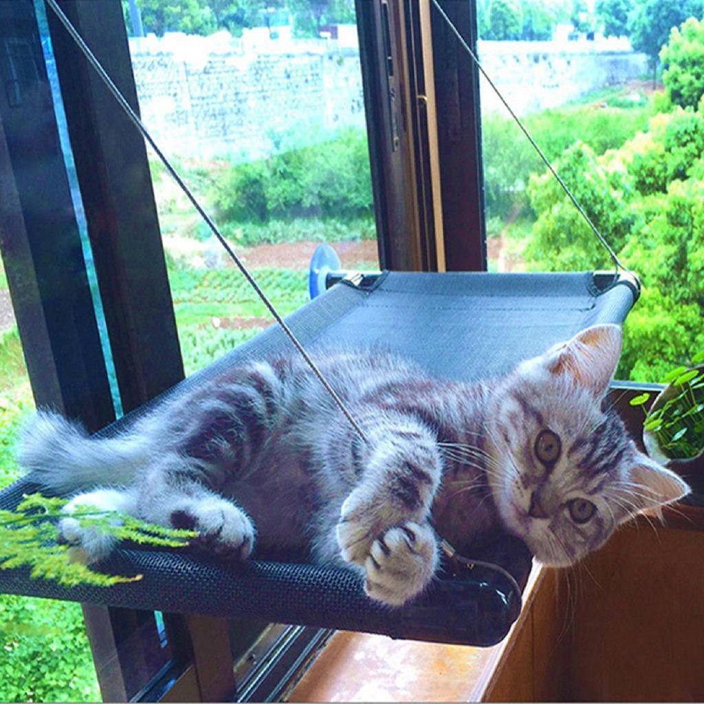 Phụ kiện tường gắn cửa sổ đáng yêu cho mèo cưng