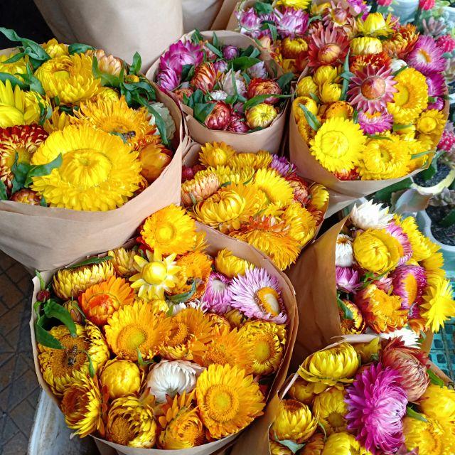 Hoa bất tử khô Đà Lạt