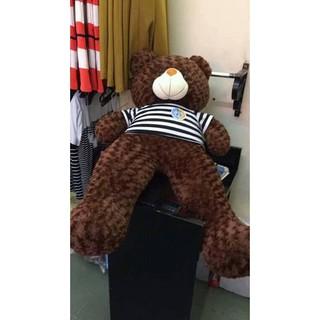 Gia đình gấu Tedy 1m, 1m2,1m5,1m6,2m kute
