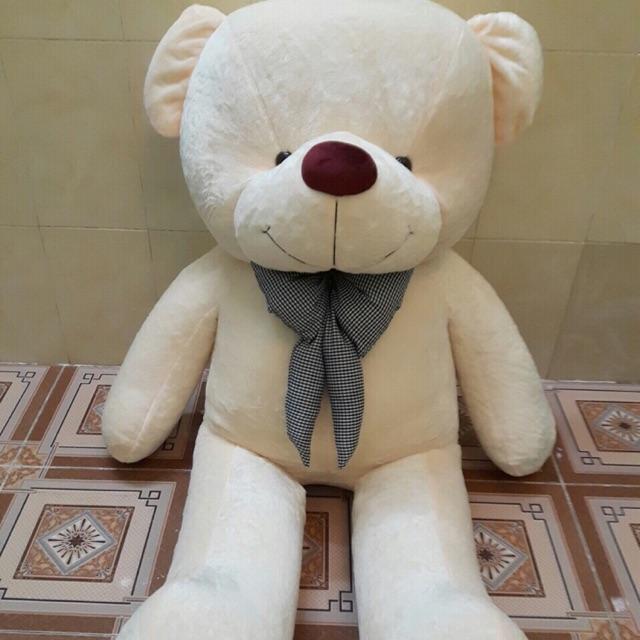 Gấu teddy 1m9