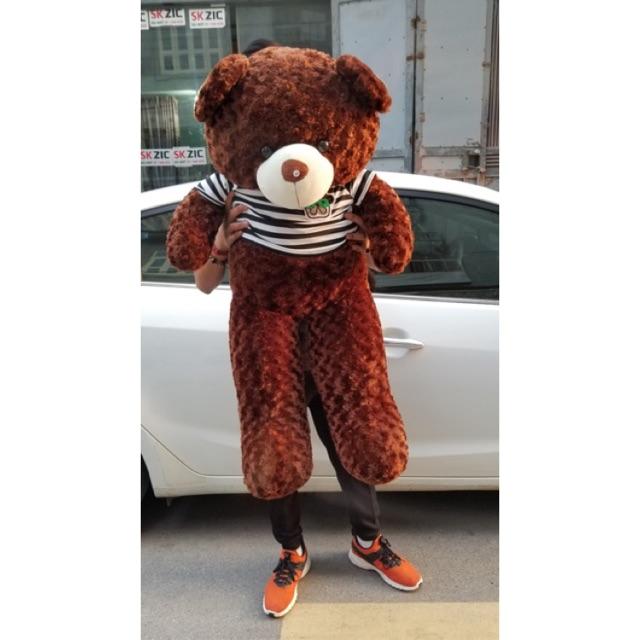 (Ảnh Thật 100%)-GẤU Bông Teddy 80cm khổ vải, cao 60cm Rẻ Vô Địch