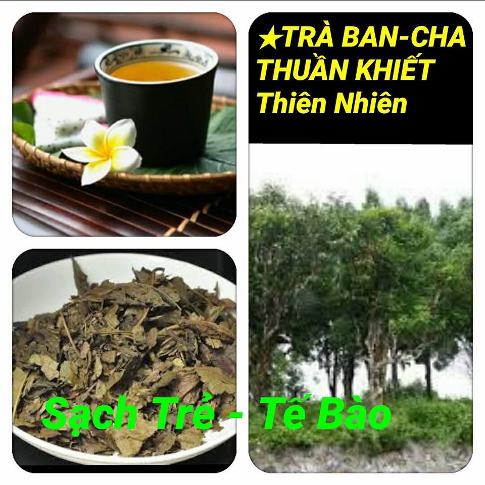 Trà Ban Cha