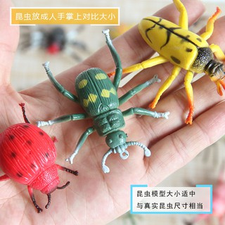 tion insect animal model beetle props set children's early education toys ladybug spider centipede scorpion bee tahaya09