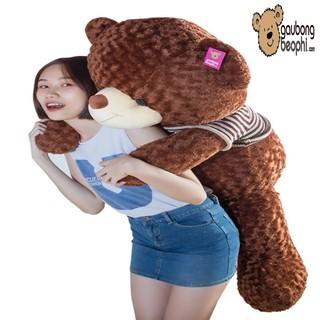 Gấu bông teddy áo len cao cấp màu socola khổ vải 1m4 chiều cao thật 1m2