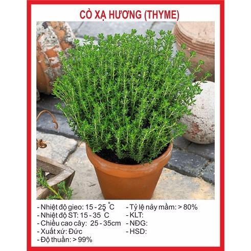 Hạt giống Cỏ Xạ Hương(Thyme) - 100 Hạt