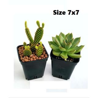 Chậu nhựa đen vuông 7cm (7x7cm) thumbnail