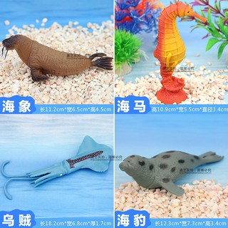 lation seal walrus seahorse dolphin squid animal model marine life animal children's toys early education props tahaya09