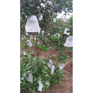 SET 10 Túi bọc trái cây 30x30,2cm bằng vải không dệt chuyên dùng bọc Xoài Cát Hòa Lộc, Xoài Đài Loan, Bưởi Năm roi - hình 3