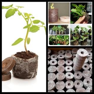 Combo 50 viên nén xơ dừa ươm hạt trồng cây - Free ship đơn trên 50k thumbnail