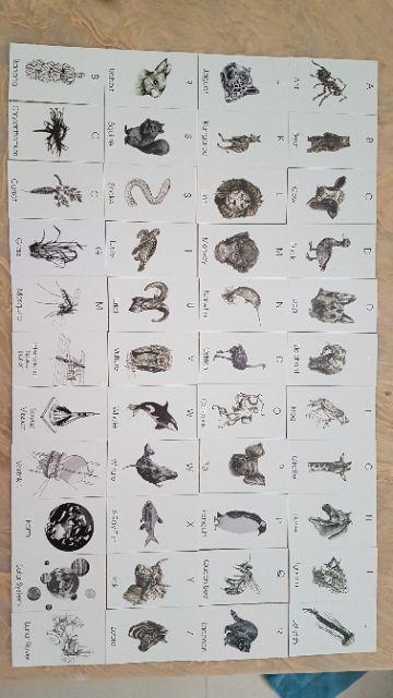Bộ 44 thẻ animal 4D, kèm mã kích hoạt, giấy cứng đẹp