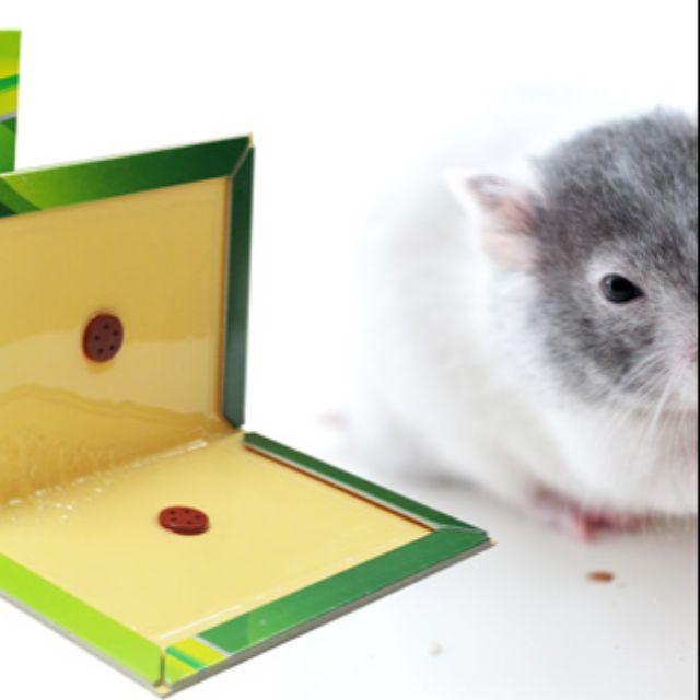 Combo 20 keo dinh chuột