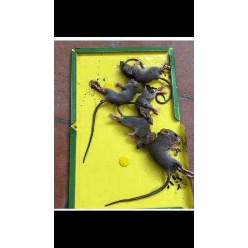 Bẫy Keo Dính Chuột Siêu Dính