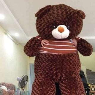 Gấu m8