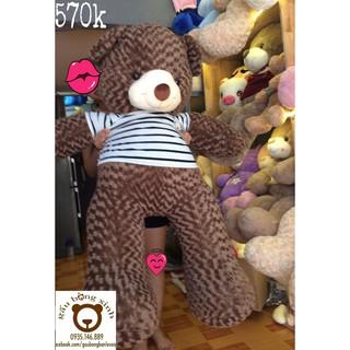 Gấu teddy vnxk áo thun dài thật 1m5