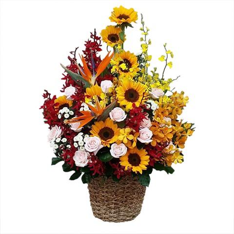 Hoa Chúc Mừng-Vũ Điệu Hoa
