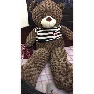 Gấu bông teddy siêu bự 2m2