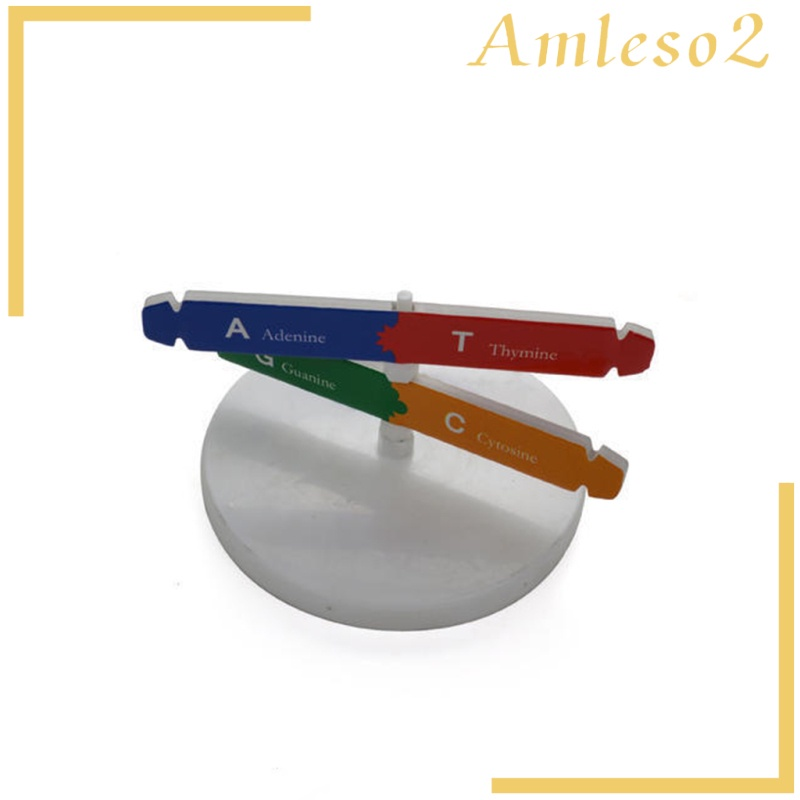[AMLESO2] Human DNA Models Double Helix Science Toys Popularization Teaching Learning