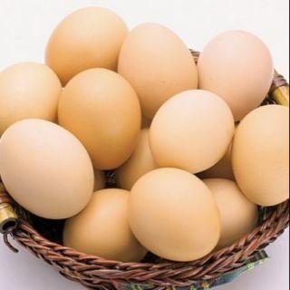 Trứng gà ta trứng gà đỏ, trứng vịt lộn
