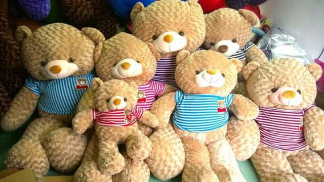 Gấu bông teddy