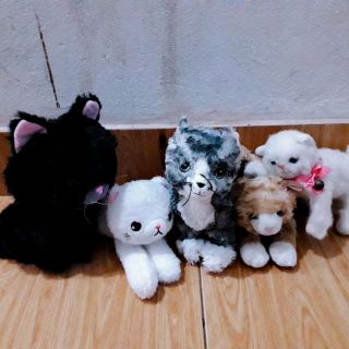 Sét mèo thú bông