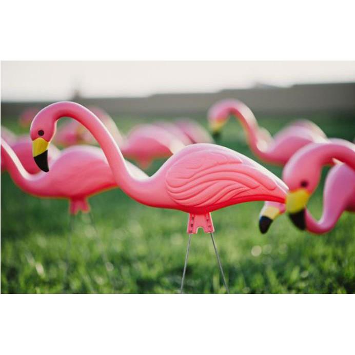 phông nền chụp ảnh hình chim hồng hạc