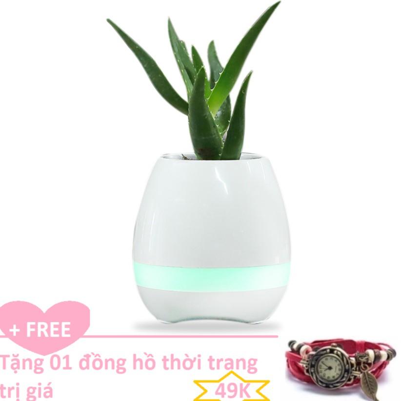 Bình trồng cây phát nhạc kết hợp loa Bluetooth, kiêm đèn ngủ + Tặng đồng hồ thời trang phong cách