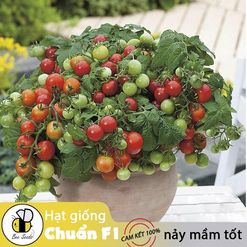Hạt giống Cà Chua Bi Đỏ Lùn Dễ Trồng, Sai Trái - Gói 20 Hạt