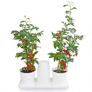 Bộ Chậu Trồng Rau Thông Minh Minigarden Basic S, Tự động tưới, tự cân bằng độ ẩm, giúp cây sống tốt không cần chăm sóc