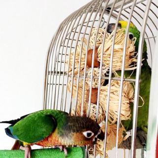 Pet Parrot Conure Cockatiel Parakeet Budgie Bird Chew Bites Swing Cages Toys