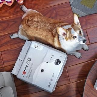 [5 gói], chúc may mắn, đồ dùng cho chó, miếng lót thấm hút, tã thú cưng, giấy, tã, mã thumbnail