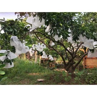 SET 10 Túi bọc trái cây 30x30,2cm bằng vải không dệt chuyên dùng bọc Xoài Cát Hòa Lộc, Xoài Đài Loan, Bưởi Năm roi - hình 1