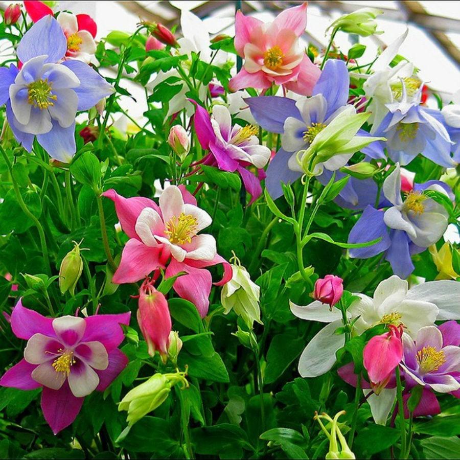 Hạt giống hoa 10 loại đã chọn Hạt giống hoa đẹp ( 10 gói)