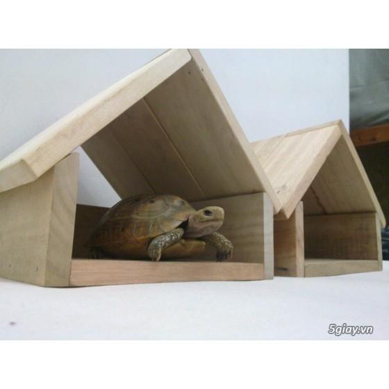 Nhà nuôi rùa cạn
