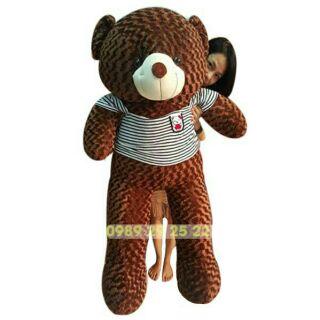 Gấu bông teddy khổ vải1m6 (cao1m4)