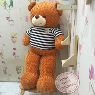 Gấu bông teddy khổ 1m4 màu cam cao cấp
