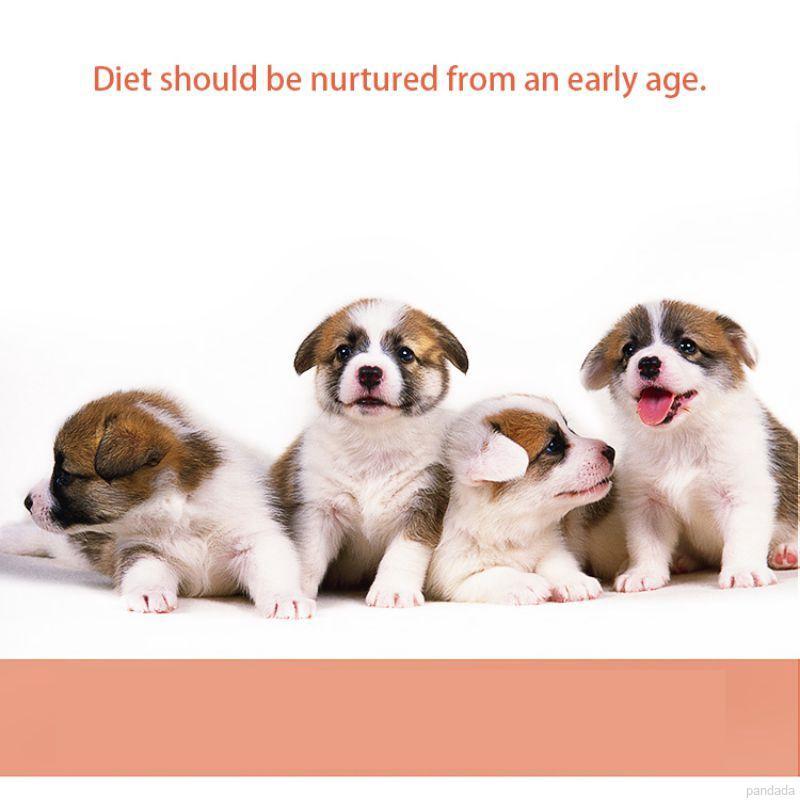 Pet Supplies & Pet Feeder Bowl Plastic Eat Slow Dog Dog Feeder Accessories Anti Choking Eating Bowl Slow Pet Supplies