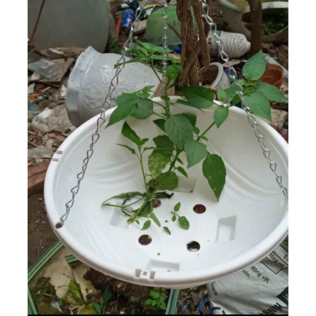 Chậu nhựa chảo treo dây xích trồng hoa loại dày, họa tiết nổi rộng 28cm
