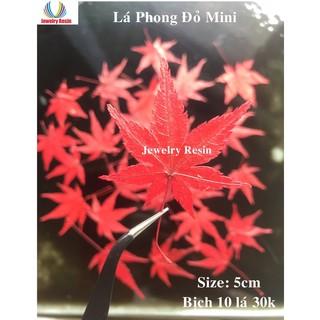 Lá Phong Đỏ (mini) Khô Thật