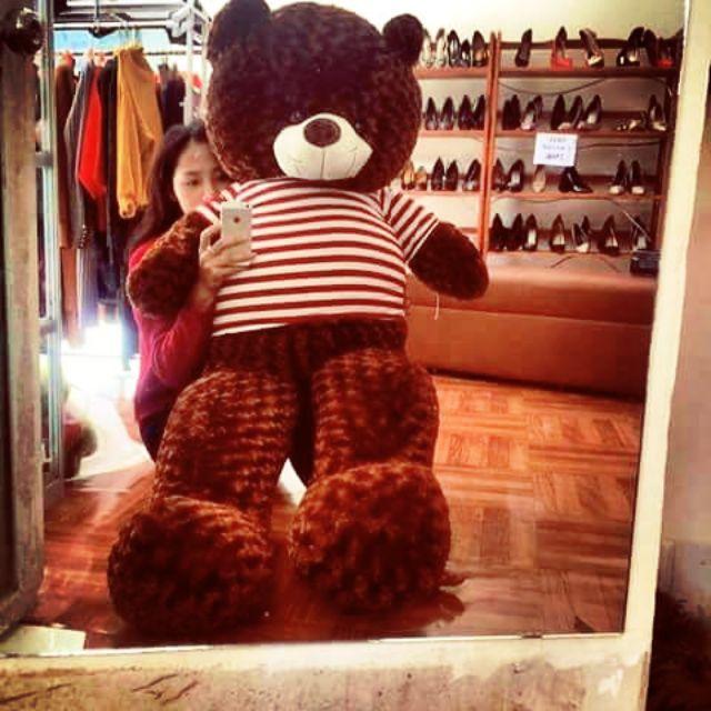 Gấu bông teddey khổ vải 1m6 cao 1m5