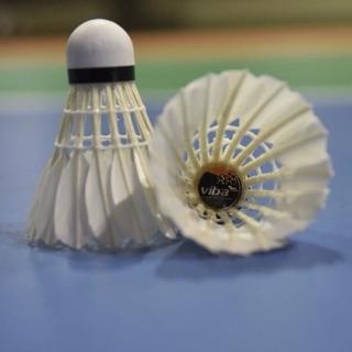 quả cầu lông VIBA siêu bền