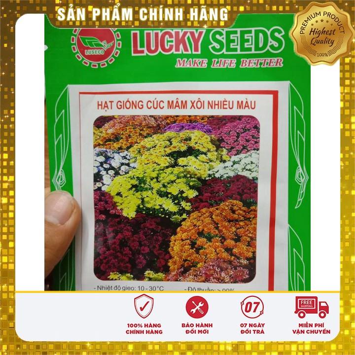 Hạt giống hoa cúc mâm xôi hat giong hoa cuc