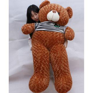 Gấu bông teddy màu vàng bò khổ1m5