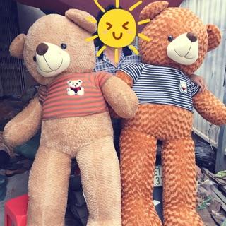 ✨gấu teddy 1M8✨