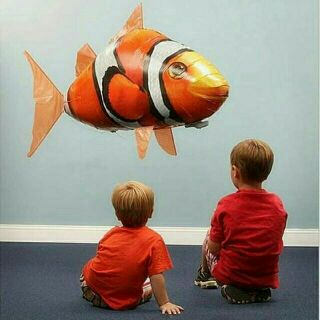 Cá bay trong nhà