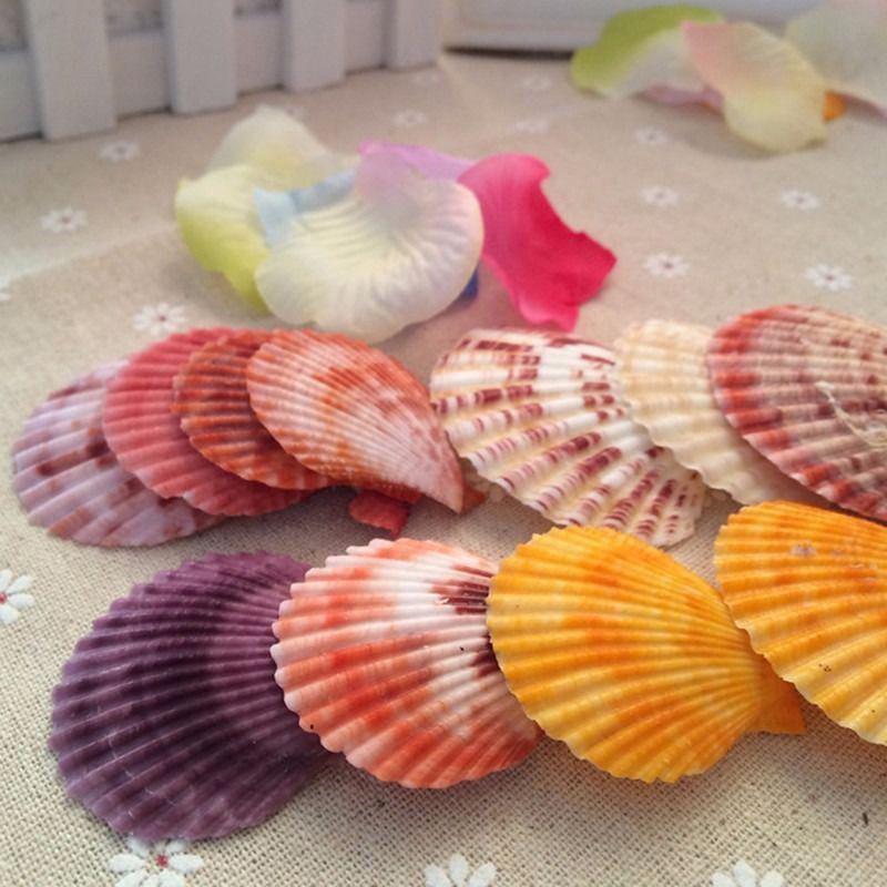 20 vỏ sò tự nhiên trang trí đồ dùng