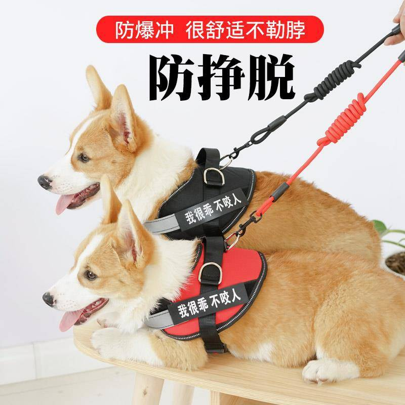 ระเบิดหมัดสุนัขฉุดเชือกสุนัขเชือกโซ่สุนัขขนาดเล็ก